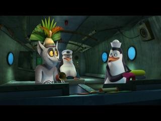 Пингвины из Мадагаскара с2с237а